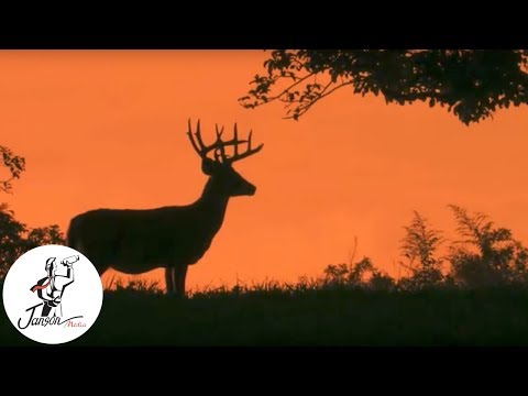 The Secret Life Of Whitetails - Trailer