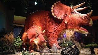 getlinkyoutube.com-Dinosaurs invade Restaurant! T-Rex, Parasaurolophus, Triceratops and more!