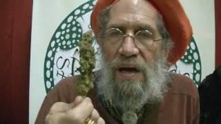 getlinkyoutube.com-Cannabis Cup 2011 Soma Smoke Out