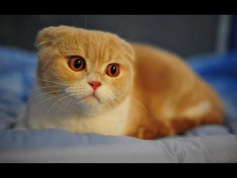 Gatos Malucos e engracados crazy and funny cats) #1