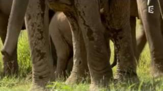 getlinkyoutube.com-echo elephant amboseli - baby boom dans la plaine part3/3