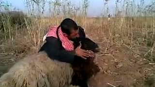 تحشيش عراقي مضحك اذبحة بكزازة
