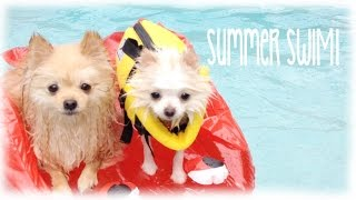 getlinkyoutube.com-My Teacup Pomeranian goes swimming Vlog & Bark Box Opening