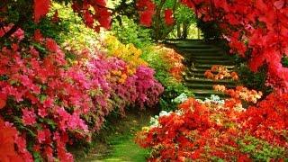 Dise o de jardines para casas campestres design gardens - Ideas para un jardin ...