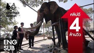 Animals Speak [by Mahidol] ช้างไทย...อย่าให้เหลือไว้แค่งา (4 พฤษภาคม 2557)