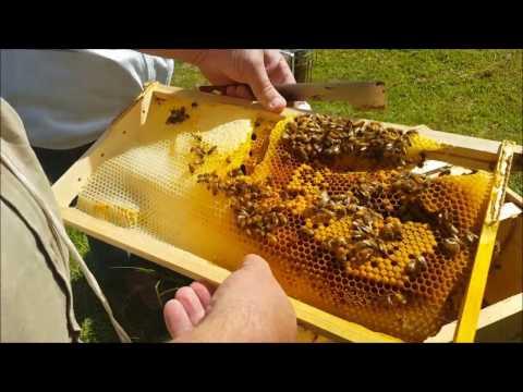 Beekeeping - Mentoring a new beekeeper