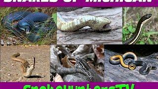 getlinkyoutube.com-Snakes Of Michigan - SnakeHuntersTV