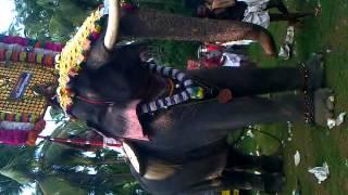 getlinkyoutube.com-Chulliparambill vishnusankar rocking perfomance