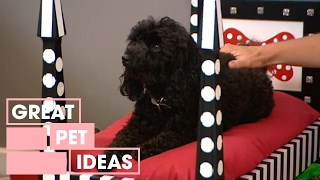 getlinkyoutube.com-Decorating: how to make a dog bed