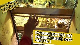 getlinkyoutube.com-Руководство по разведению кур Часть 1 // Жизнь в деревне