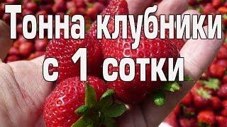 getlinkyoutube.com-Тонна клубники с 1 сотки часть 1