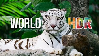 getlinkyoutube.com-The World in HDR in 4K (ULTRA HD)