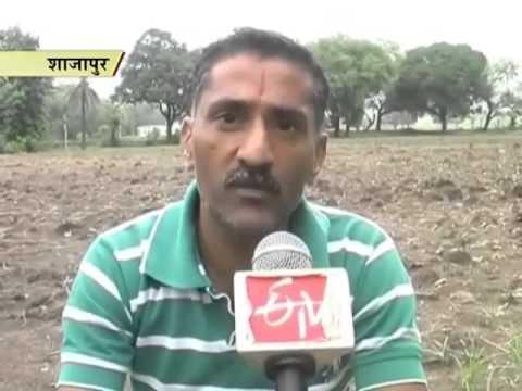 Fake seeds add insult to injury of farmers after weak monsoon