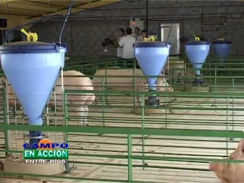 Granja de Cerdos de Tierra Greda