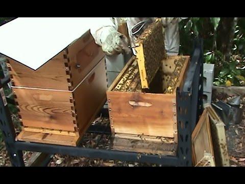 Beekeeping: Flow Hive Inspection - Sharon & Ian at Eumundi, Australia.