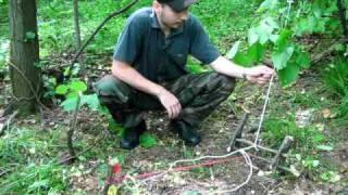 getlinkyoutube.com-Survival Triggered snare trap -Prezivljavanje u prirodi-Modifikacija nagazne zamke u poteznu zamku