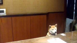getlinkyoutube.com-「暖灯館きくのや」の看板犬・舞子がお出迎え