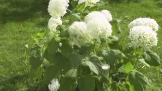 getlinkyoutube.com-Beautiful Nature (2010)  HD