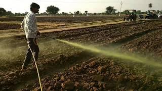 Spraying of weed-killer medicines inside the cumin seed crop