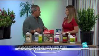 Consejos para embellecer nuestro jardín por Osmani Navarro