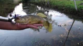 Pesca de Traíras com Spinnerbaits (em HD)