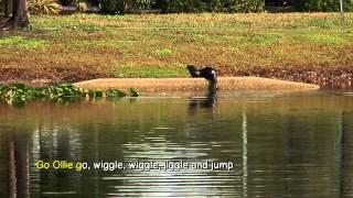 Otters | Ollie the Otter Karaoke | Educational Songs | YouTube for Kids | Jack Hartmann