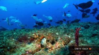 getlinkyoutube.com-Nature's wonders: Coral reefs in HD
