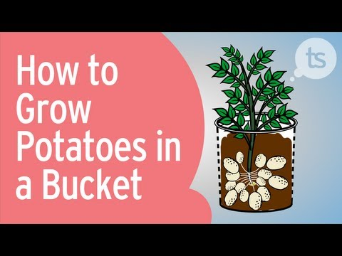 Fun Video Shows You How to Grow Potatoes in a Bucket - A simply good life.