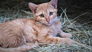 What Happened to the Kitten Attacked by the Horse? UPDATE!
