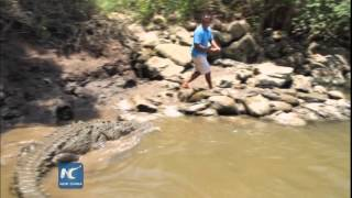 "getlinkyoutube.com-Dundee ""Crocodile"" turns into reality in Costa Rica"