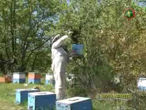 Μελισσοκομία για αρχάριους - από την Άγρια Μέλισσα - Trailer