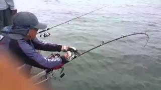 getlinkyoutube.com-Mancing Ikan Jenahak Terbesar