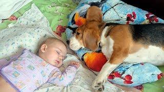 getlinkyoutube.com-Babies and Animals Sleeping Together Compilation 2014