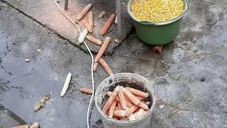 Теребилка для кукурузы(Masina de batut porumb)