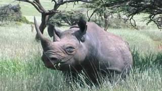 getlinkyoutube.com-Kenya Wildlife at Lewa Part 1: Peaceful Kingdom - Playing Elephants; Birds!