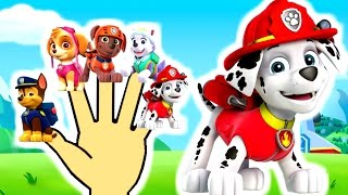 getlinkyoutube.com-Finger Family Collection Paw Patrol | Top 10 Finger Family Songs | Finger Family Song Peppa pig