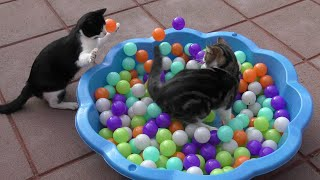 Funny Cat Compilation 2016 - 4K Ultra HD 2160p Resolution Video
