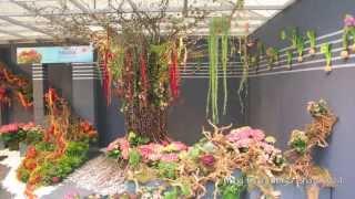 getlinkyoutube.com-D19 香港花卉展覽 2014 Hong Kong Flower Show