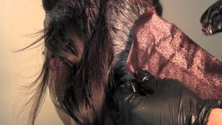 getlinkyoutube.com-How To: Diamond Triangle Hair Color Technique