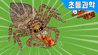 getlinkyoutube.com-깡충거미 vs 곤충 우리의 다른점은? 곤충 한살이 관찰하기! 지니키즈★초등과학