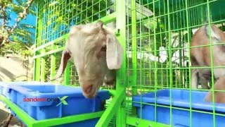 getlinkyoutube.com-Sandesh One Goat Farming