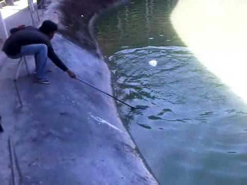 Penangan memancing siakap di Kolam GP Rawang