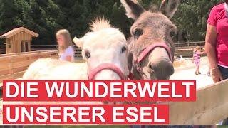 getlinkyoutube.com-Gut Aiderbichl: Die Wunderwelt unserer Esel