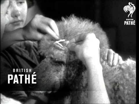 Bantam Pack - Animals Beauty Parlour (1950)