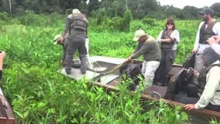 getlinkyoutube.com-Amazonas hunting anaconda