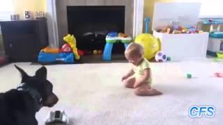 getlinkyoutube.com-Cachorros Amam Bebês!