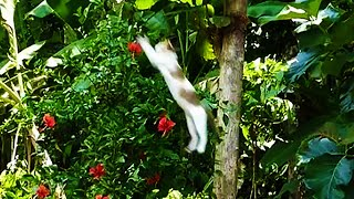 getlinkyoutube.com-Cat catching a bird - Amazing HUNTER CAT jumbs very high to catch a bird !