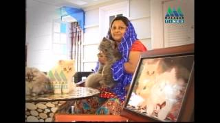 getlinkyoutube.com-MALABAR TIMES '' BEAUTIFUL PERSIAN CATS '' TIRUR STORY