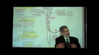 THE SPINAL CORD & SPINAL TRACTS; PART 2 by Professor Fink