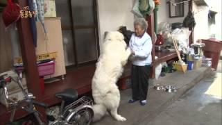 getlinkyoutube.com-TV동물농장 131117(다시보기) #1(1)